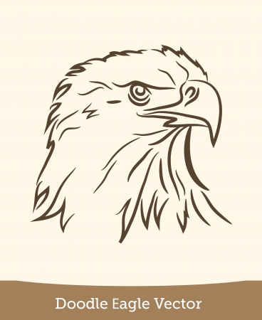 doodle eagle Illustration