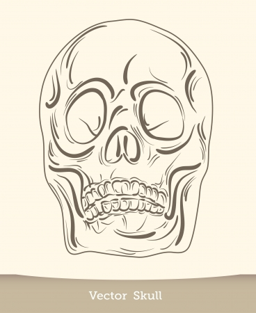 vector ink skull Stock Vector - 19823248