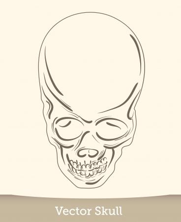 vector ink skull Stock Vector - 19823226