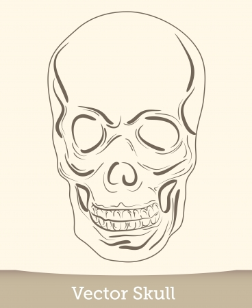 vector ink skull Stock Vector - 19823232