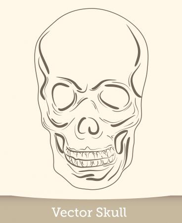 vector ink skull Stock Vector - 19823232