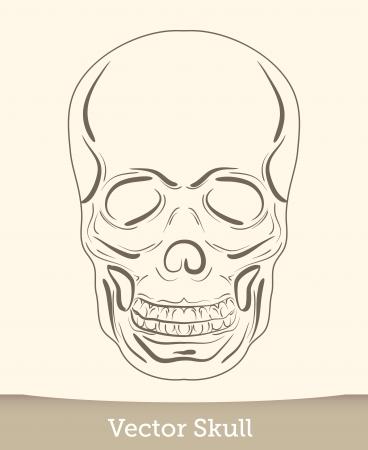 vector ink skull Stock Vector - 19823234