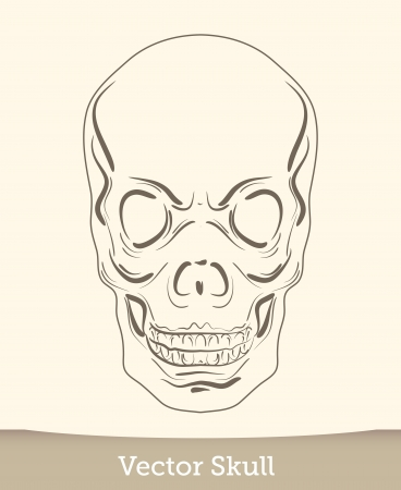 vector ink skull Stock Vector - 19823233