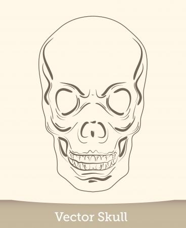 vector ink skull Stock Vector - 19823233