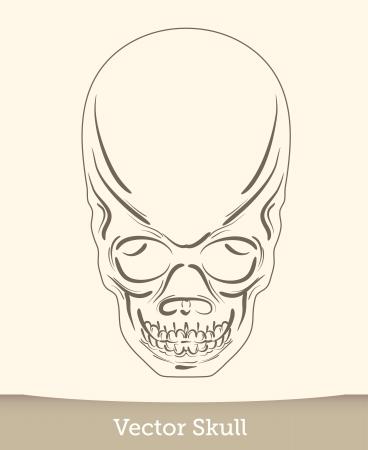 vector ink skull Stock Vector - 19823230