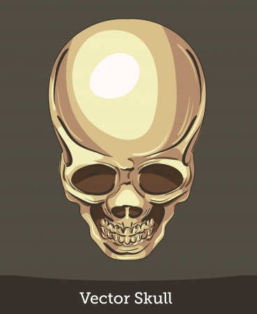 vector ink skull Stock Vector - 19823202