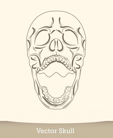vector ink skull Vector