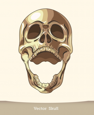vector ink skull Stock Vector - 19823304