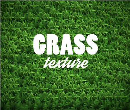 soccer grass: Green Soccer Grass Field