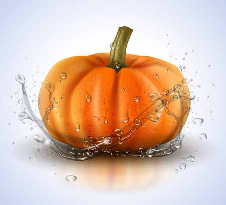 Pumpkin isolated on white background with splashes of water. Realistic vector illustration.