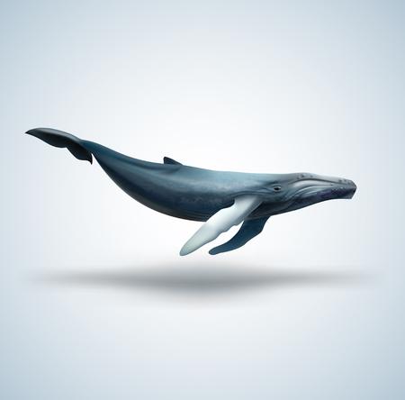 Blauwe walvis geïsoleerd op een witte achtergrond Stockfoto