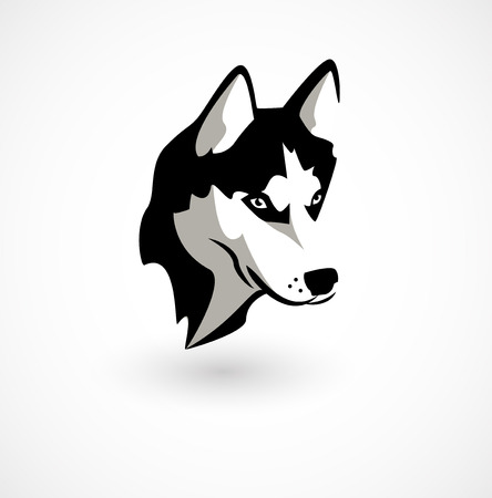 Vector illustration of Husky isolated on white. Illustration