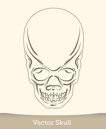 skull illustration isolated on white background. Vector mode Reklamní fotografie - 124619486