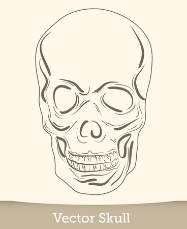 skull illustration isolated on white background. Vector mode Reklamní fotografie - 124619487