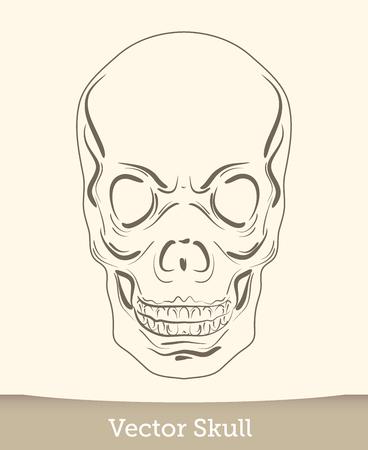 skull illustration isolated on white background. Vector mode