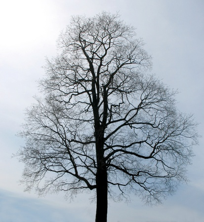silhouette of tree for your projects photo