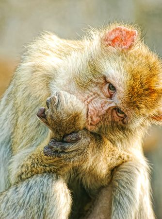 Funny monkey got angry photo