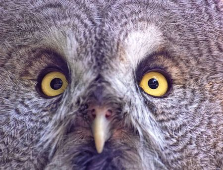 Owl face Stock Photo - 6294986