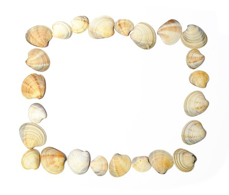 Frame of shells isolated over white Stock Photo - 6927144
