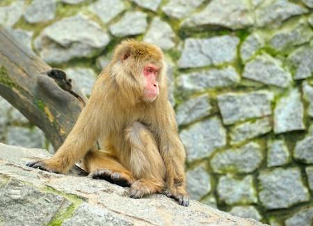 Sad monkey sitting on stones photo