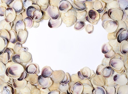 Frame of shells isolated over white Stock Photo - 7127062
