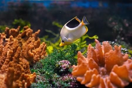 Bunte Unterwasserwelt mit Fisch  Standard-Bild