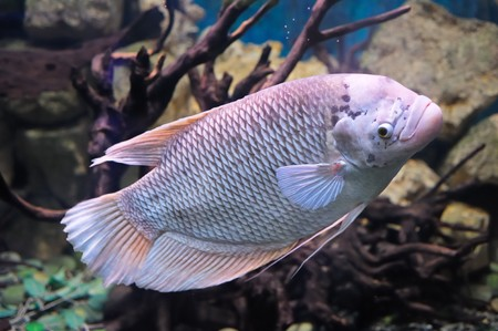 demersal: Colorful underwater world with fish