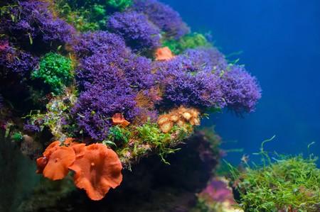 Colorful underwater world photo