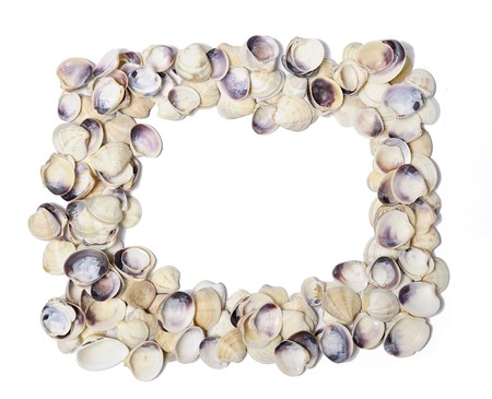 Frame of shells isolated over white Stock Photo - 7176859