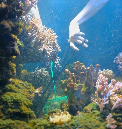 demersal: Aquarium cleaning