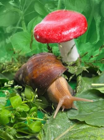Snail near mushroom in nature photo