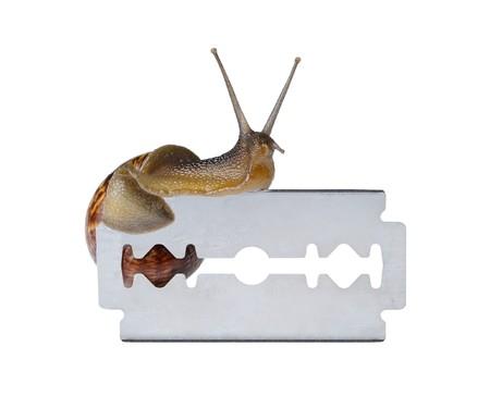 Snail on razor isolated on white background