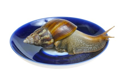 Snail trying to escape from plate isolated on white background Stock Photo - 7591132