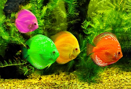 Colorful fishes in the water Stock Photo