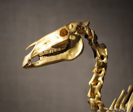 Golden dragon skull with bones photo