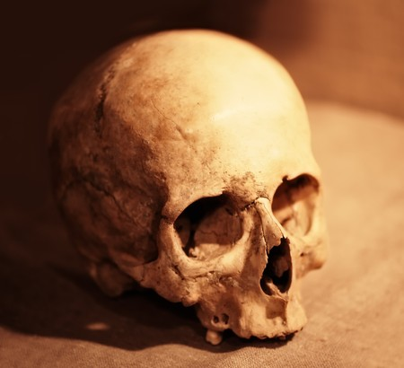 skeleton skull: Skull of the person close up
