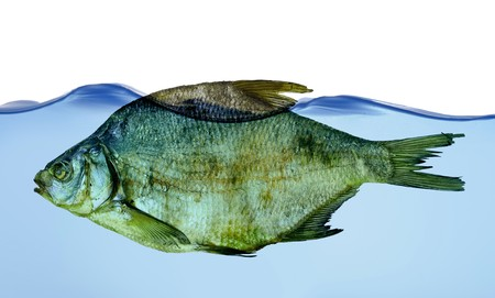 Dry fish in water isolated on white background Stock Photo - 8155822