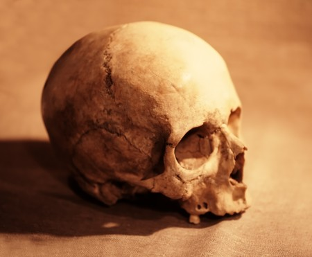 Skull of the person close up