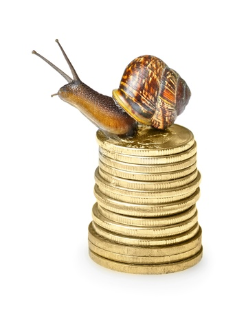 deposit slip: Snail on golden coins isolated on white