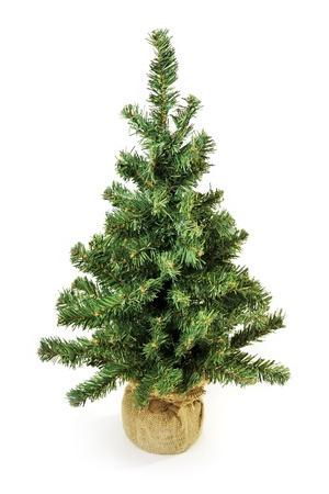 Bare Christmas tree without decoration isolated on white photo