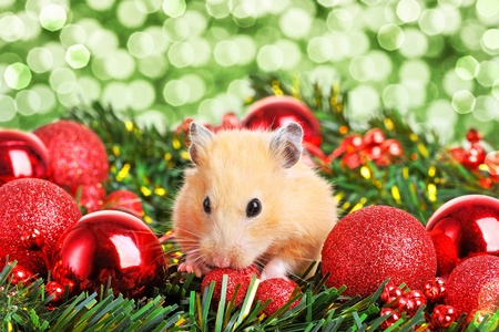 Funny little hamster in branch of fir photo