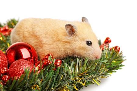 gewgaw: Funny little hamster in branch of fir