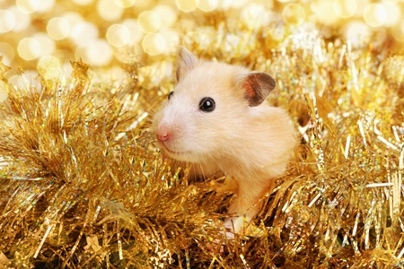Little hamster in the golden tinsel Stock Photo - 11770177