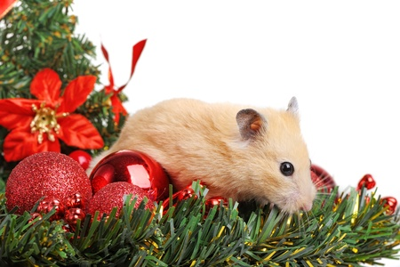Funny little hamster in branch of fir Stock Photo - 11770192