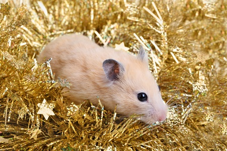 gewgaw: Little hamster in the golden tinsel