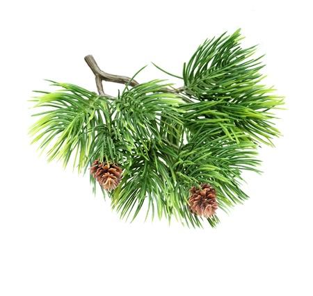 Close-up van dennenboom tak geïsoleerd op wit