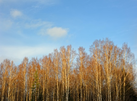 Trees and the sky in autumn photo