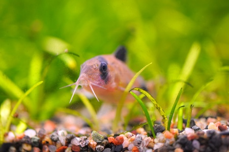 Fish in the algae underwater (shallow focus on jaws) photo