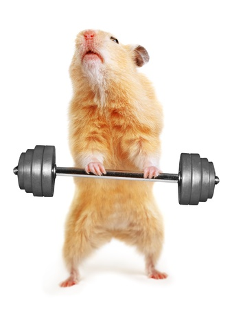 Hamster with bar isolated on white photo