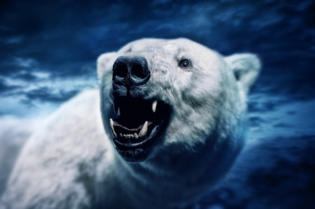 Angry polar bear with sharp teeth photo